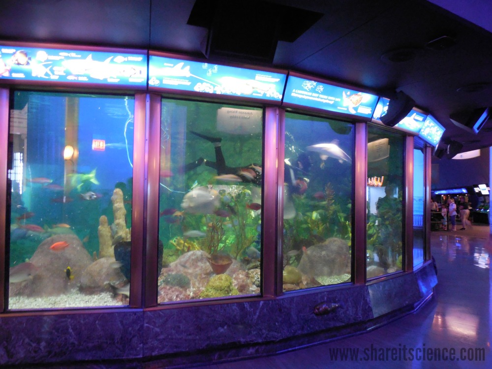 share it science 10 reasons to visit chicago s shedd aquarium in