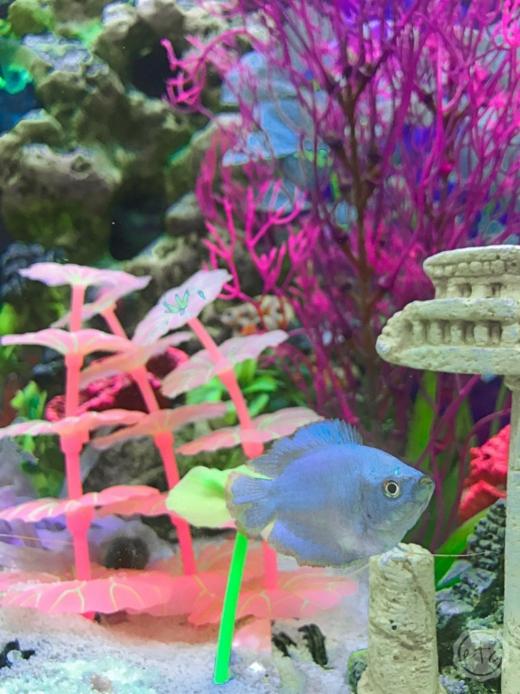How to Decorate Aquarium with Pastel Faux Plants