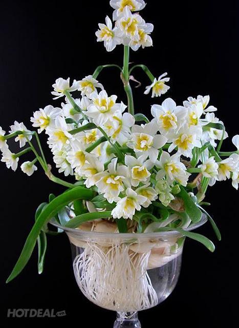hoa thuy tien dep 4