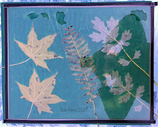 Wet cyanotype_Sue Reno_Image 205