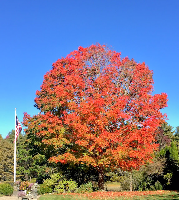 Main fall foliage