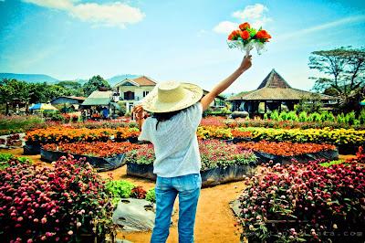 Taman Begonia Lembang, Rute, Harga Tiket Masuk dan Jam Buka