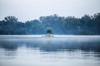Île avec un arbre qui pousse. Une forêt se trouve au bord du lac.