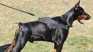 Islam Pedoman Hidup Belajar Dari Anjing Pemburu