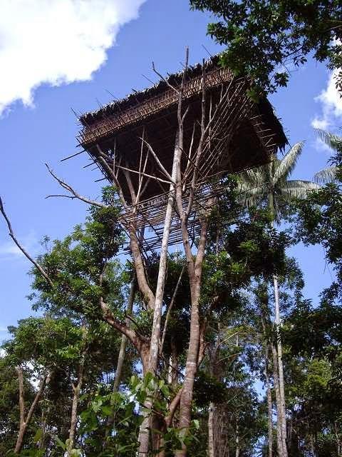 casa en el árbol a altura considerable de la tribu korowai
