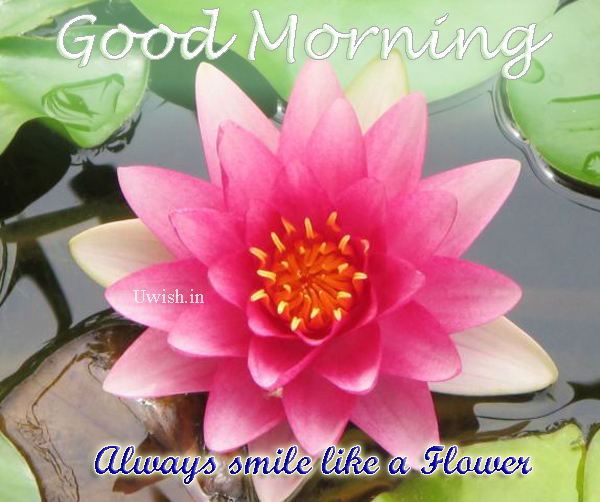 Good Morning - Always smile like a beautiful flower. Make every morning as fresh as the flowers.  Good Morning wishes and greetings