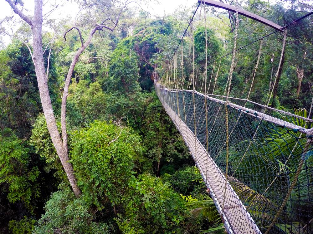 Tahukah anda bahawa Canopy Walk di Taman Negara Pahang merupakan canopy walk yang terpanjang di dunia? Mula-mula tak percaya lepas tu bila buat research ... & Taman Negara Pahang: Menerokai Canopy Walk dan Mutiara Resort ...