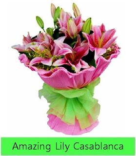Lily Casablanca in Vase