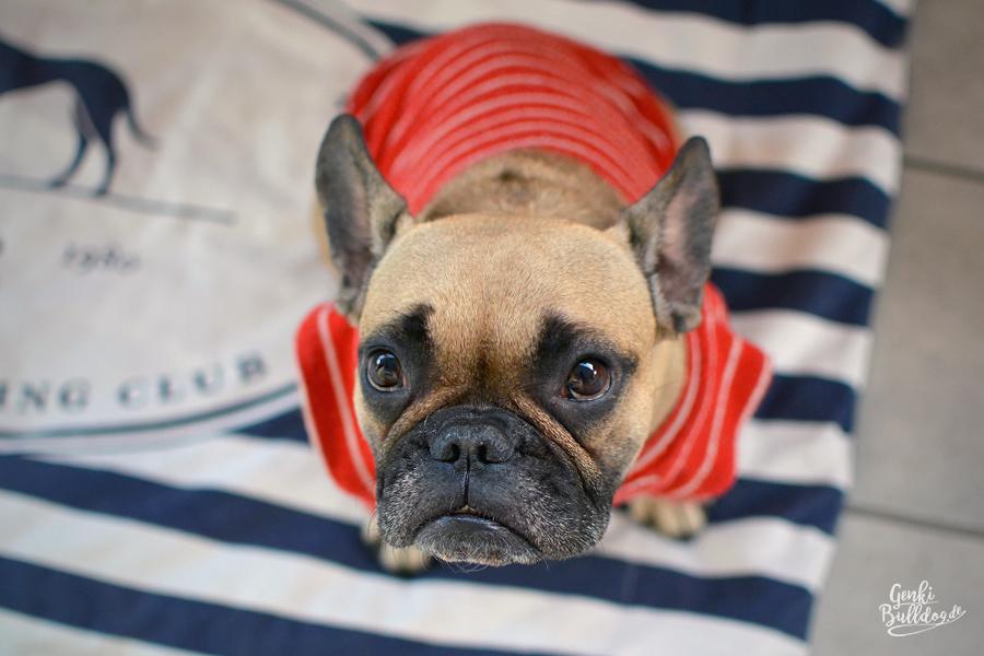 Hunde fotografieren - Die Perspektive