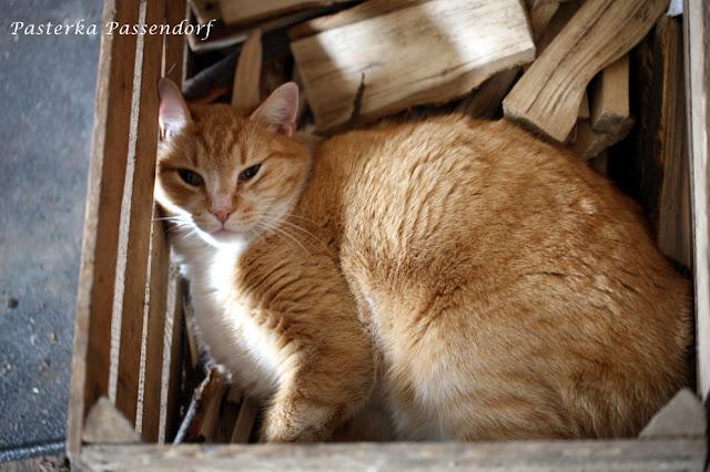 Rudy Kot z Mydlarni Rudy Kot uwielbia cepłe miejsca i asystuje przy produkcji naturalnych mydeł.