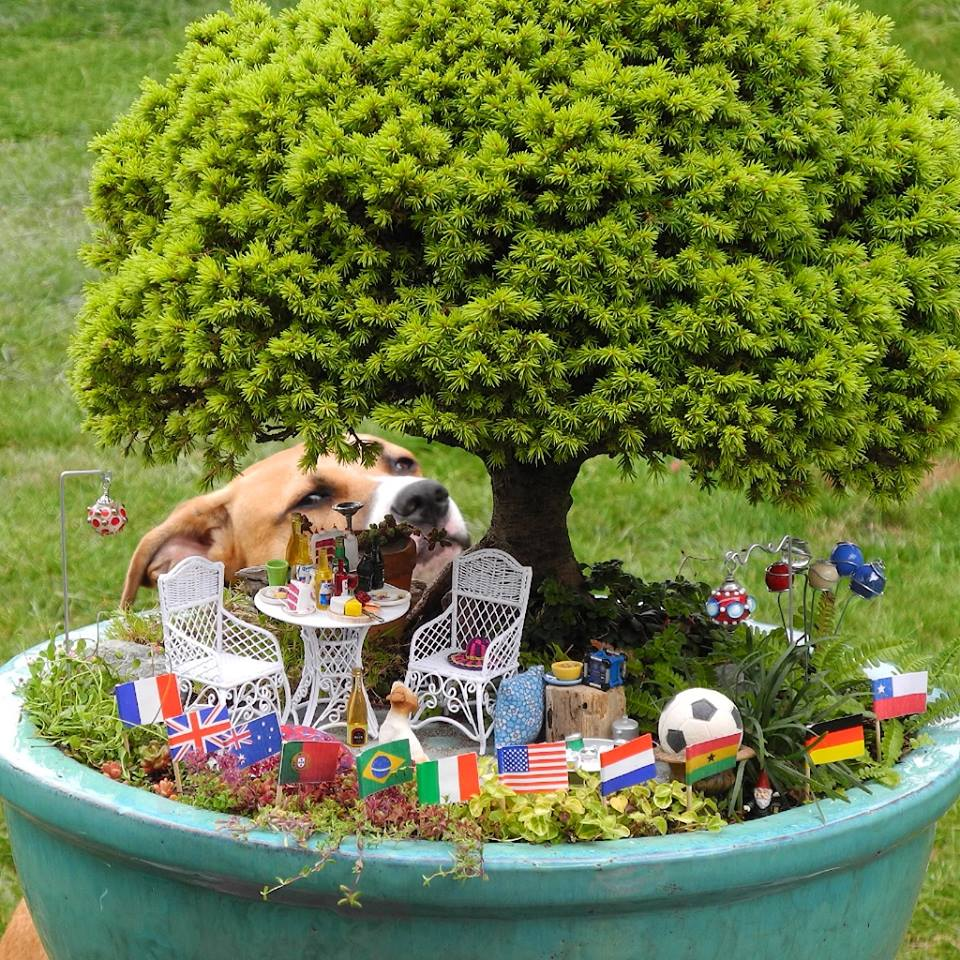 How to create a miniature garden or fairy garden 50 ideas for Miniature garden ideas