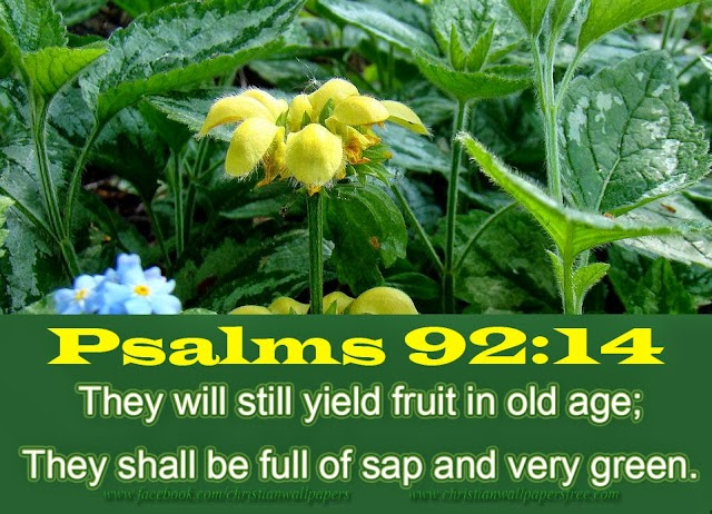 They wills till yield fruit in old age
