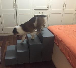 rampas estáveis para cães