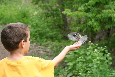 Chickadee flying off William's hand ~ Royal Botanical Garden :: All Pretty Things