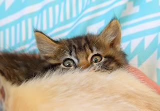 kitten peering over another kitten
