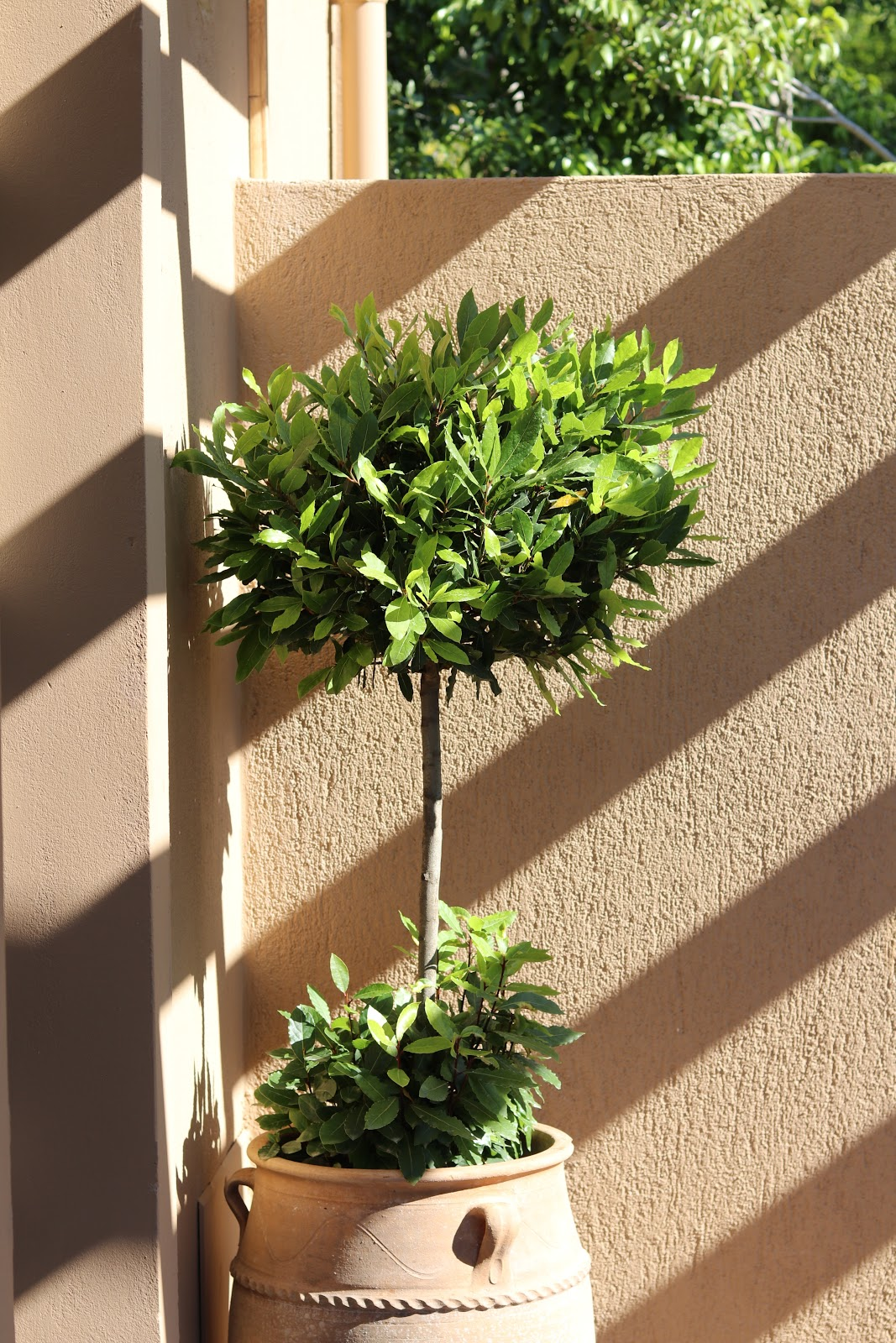 Topiary Tree, F Zeen Resort, Unique Villas, Kefalonia