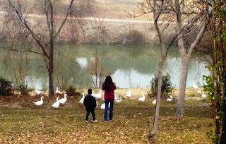 Dos niños observan las ocas que se alimentan en la orilla de un arroyo.