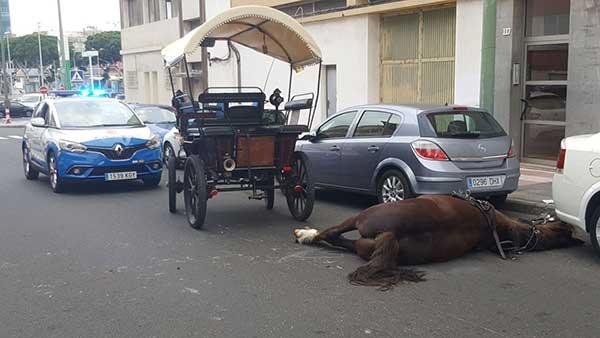 Fallece un caballo del servicio de tartanas de Las Palmas de Gran Canaria