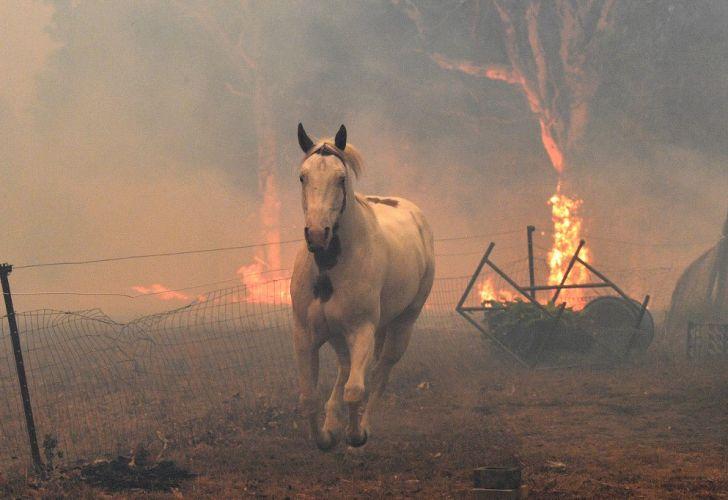 No olvidar a Australia donde aún se combate el gran incendio que se formó por fusión de dos fuegos