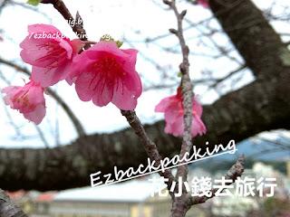 2018年沖繩冬日櫻花自由行
