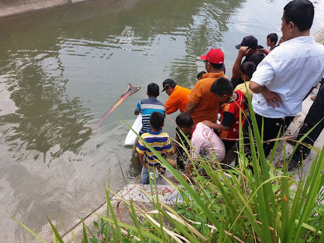 Wabup Suhatri Bur Menebarkan Ribuan Bibit Ikan Di Korong Tanjung Pisang