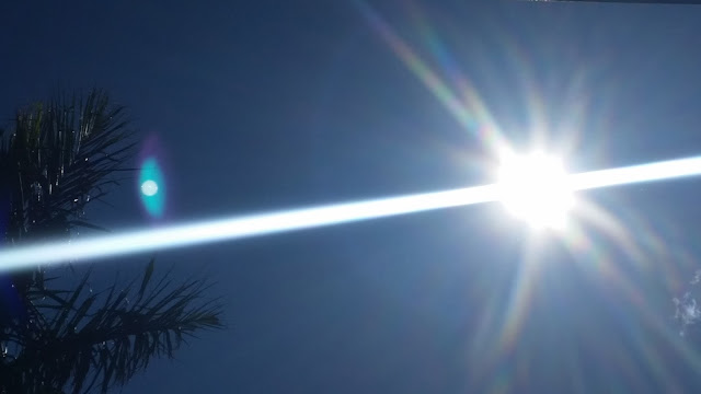 The bright sun in the sky with its rays above the palm tree