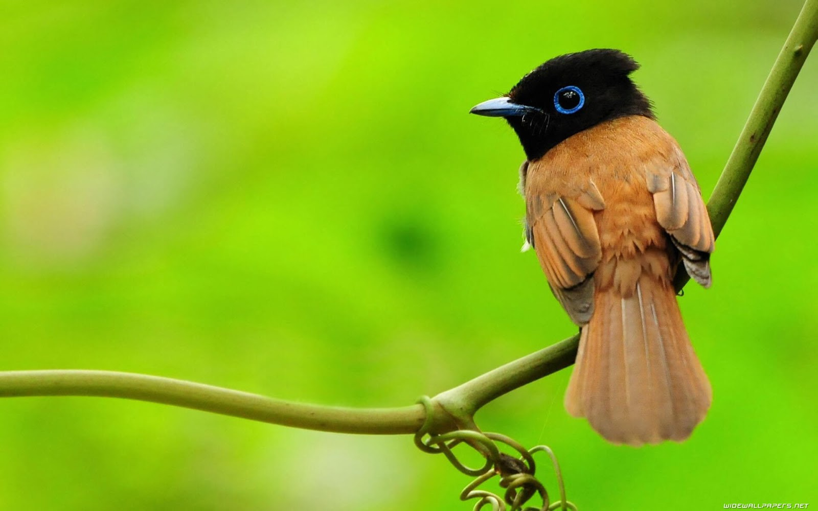 Hd Bird Wallpaper 3d Images Download Free New Wallpapers Hd High Quality Motion