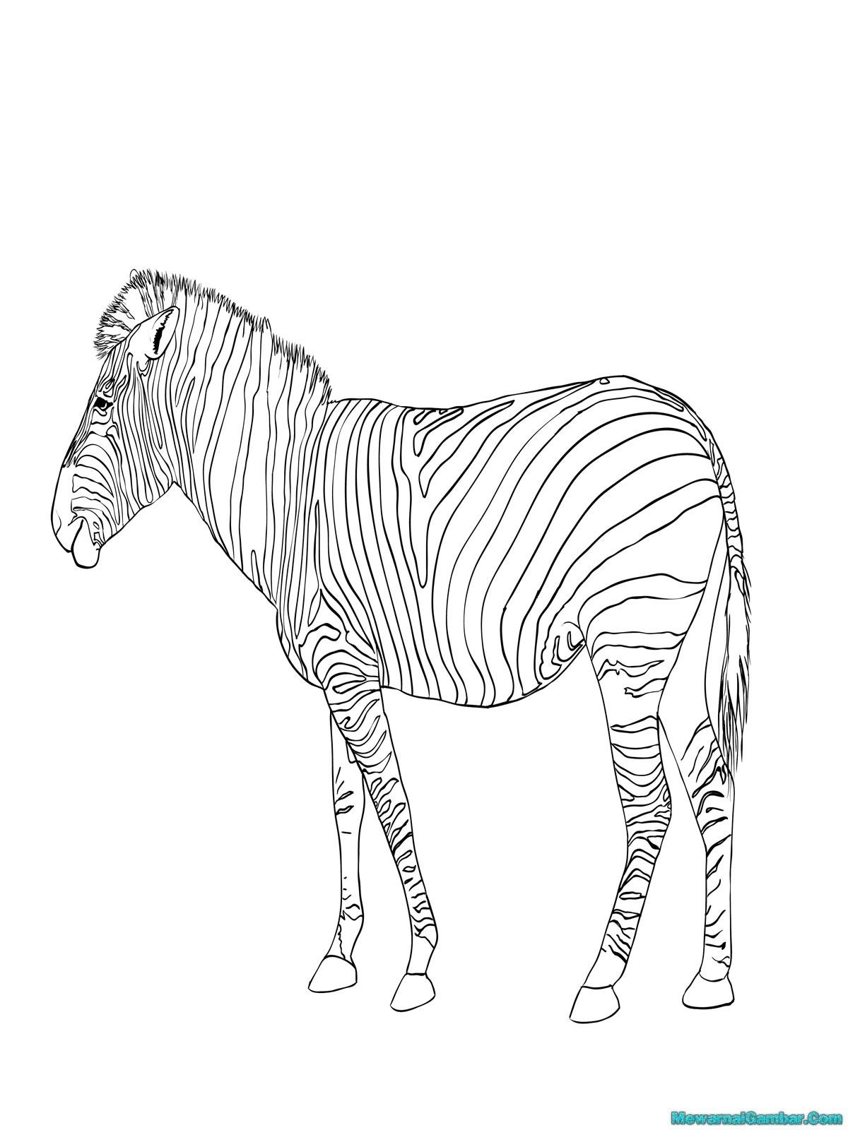 Gambar Kuda Zebra Untuk Mewarnai