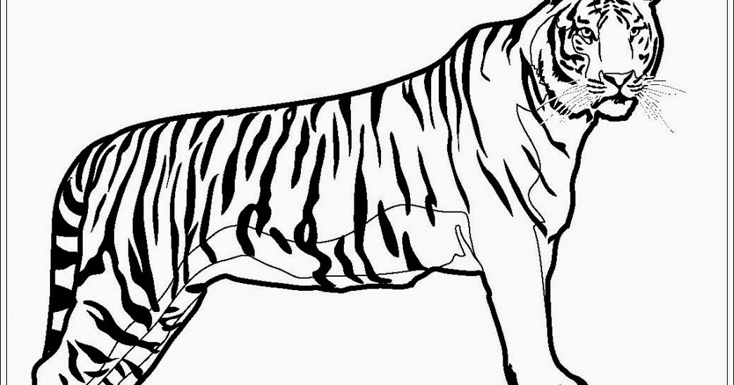 Mewarnai Gambar Hewan Harimau Mewarnai P