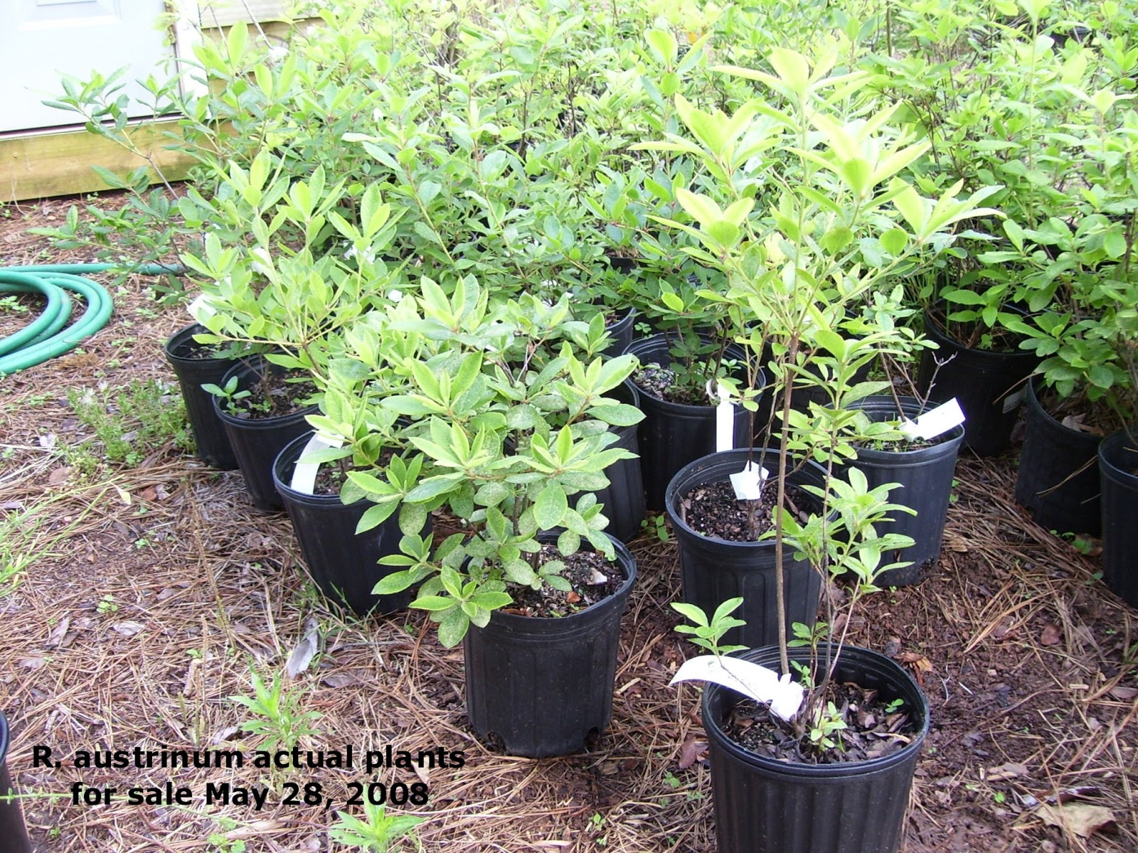 Gardening Shady Style Ing Plants Online How To Do It