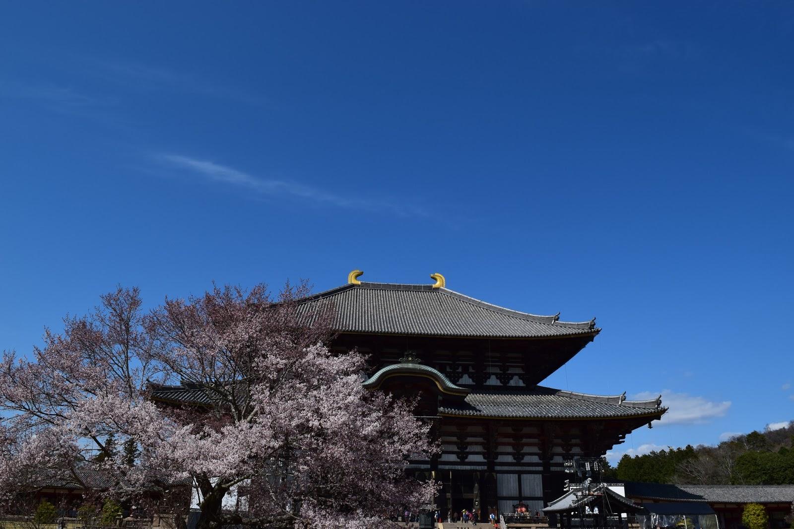 Daibutsu den and Sakura