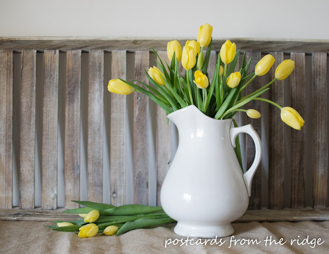 Postcards from the Ridge. Yellow tulips in a white ironstone pitcher.