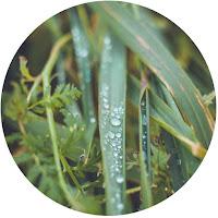 http://daydreamincolors.blogspot.fr/2016/01/fresh-grass.html