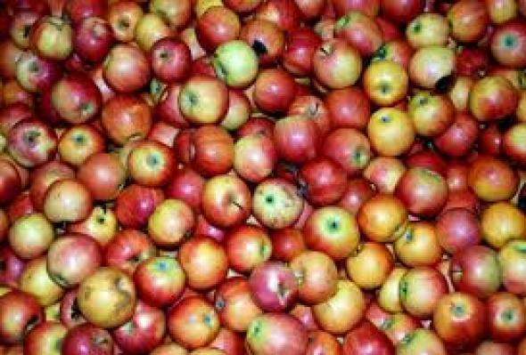 Δεσμεύτηκαν 2,8 τόνοι μήλων στον Πειραιά
