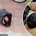 Ibu cuba kirim bayinya dalam bungkusan ke rumah anak yatim melalui khidmat kurier