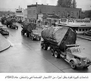 شاحنات كبيرة تقوم بنقل اجزاء من اشجار ضخمة في واشنطن في عام 1943م