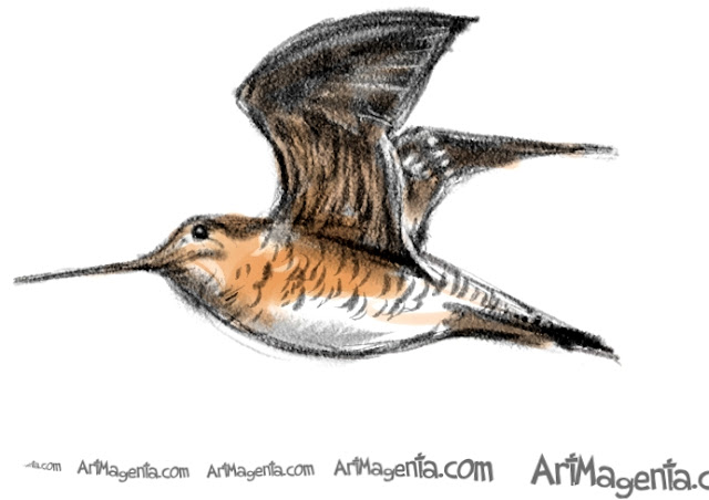 Great Snipe sketch painting. Bird art drawing by illustrator Artmagenta