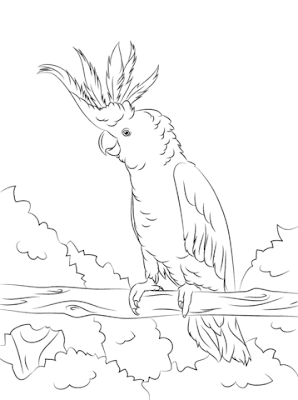 Adorable King Cockatoo - Coloring Sheet For Kids
