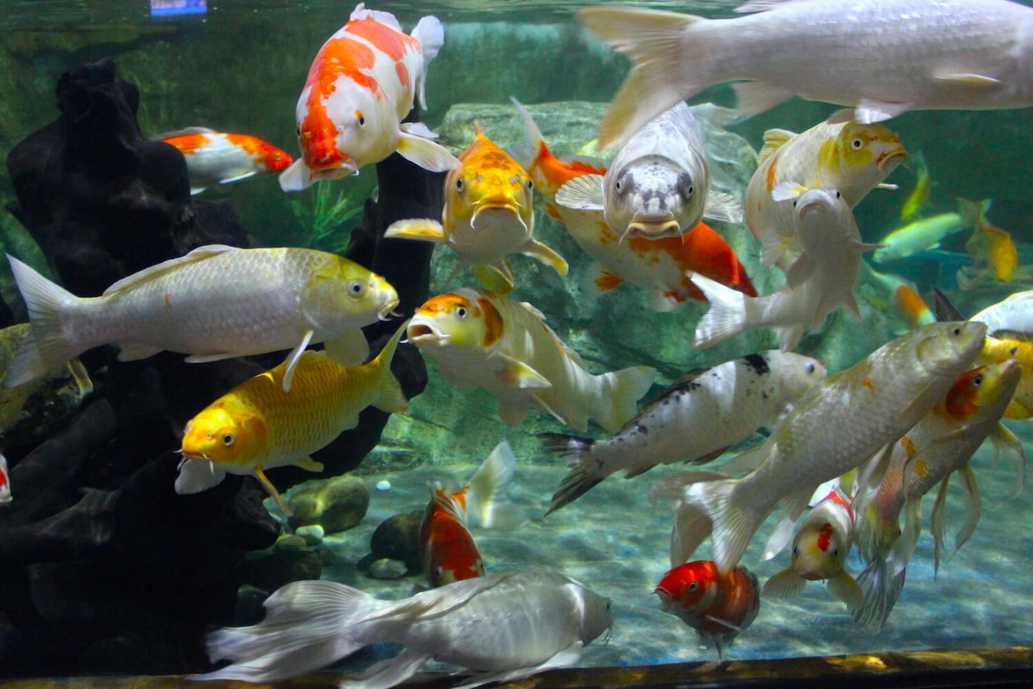 vincom times city mega mall vinpearl aquarium fish