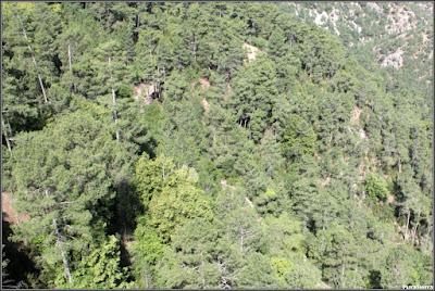 Tilos del Monte Garcielligeros incrustados entre los pinos