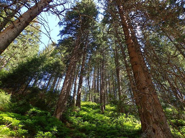Las w drodze na Grzesia