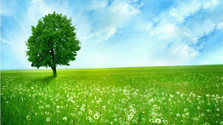 Beautiful Tree Nature Pictuer