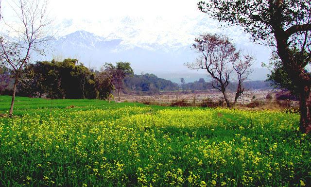 Kangra-Valley-Dharamshala