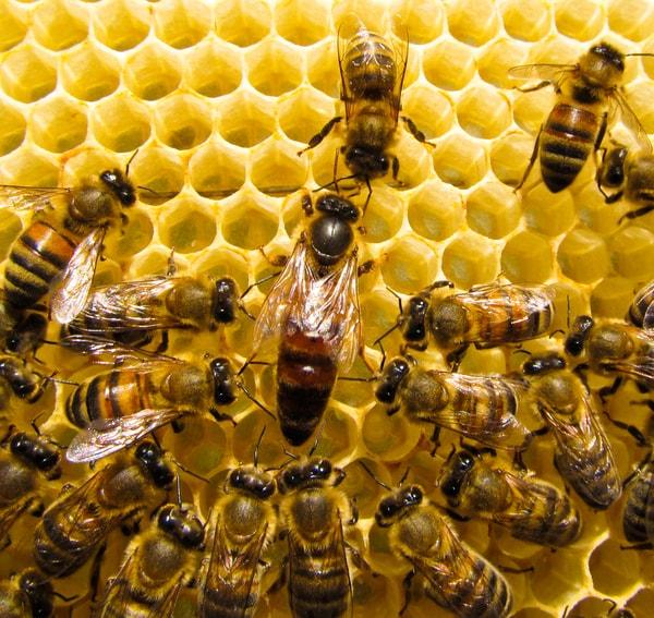 Μελισσοκομικά μυστικά…