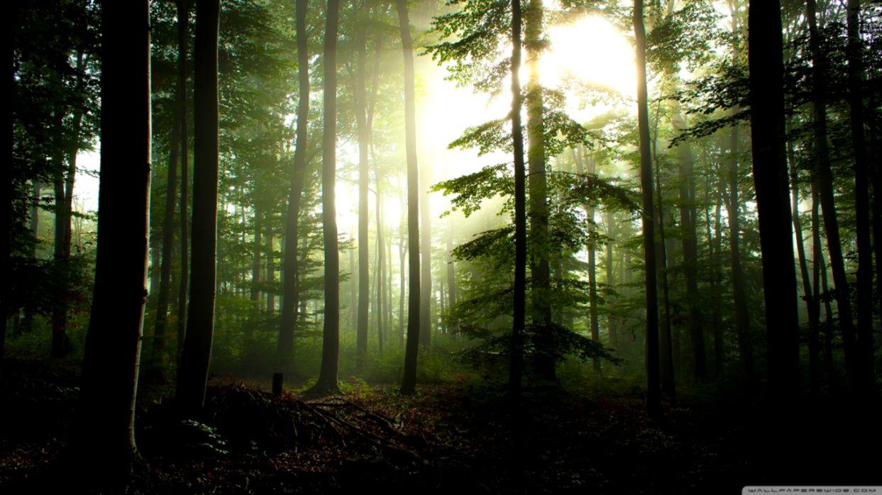 coniferous forest %25E2%259D%25A4 4k hd desktop wallpaper for 4k ultra hd tv