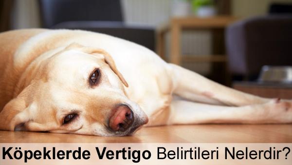 Köpeklerde Vertigo Belirtileri Nelerdir?