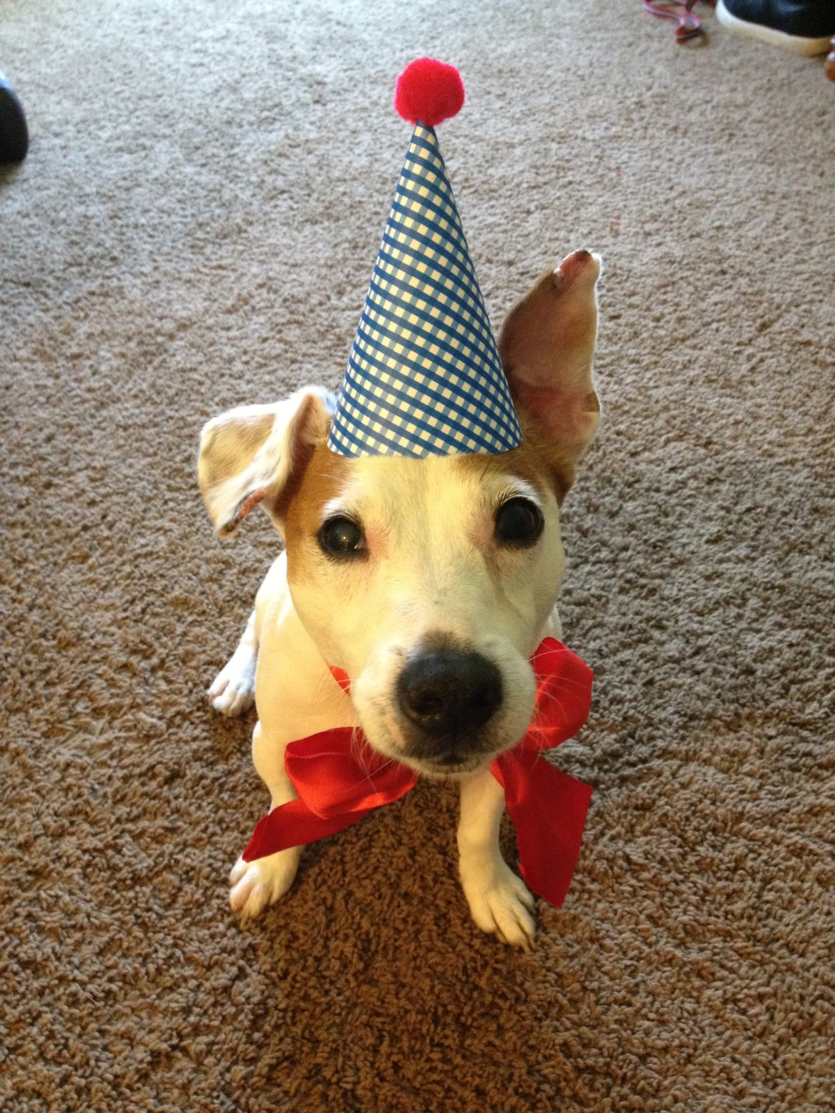 Do It Yourself Home Design: Daydreamer, Creator, DIY Extraordinaire: Dog Birthday Party