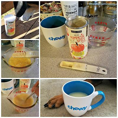 pumpkin spice latte dogs cats honest kitchen