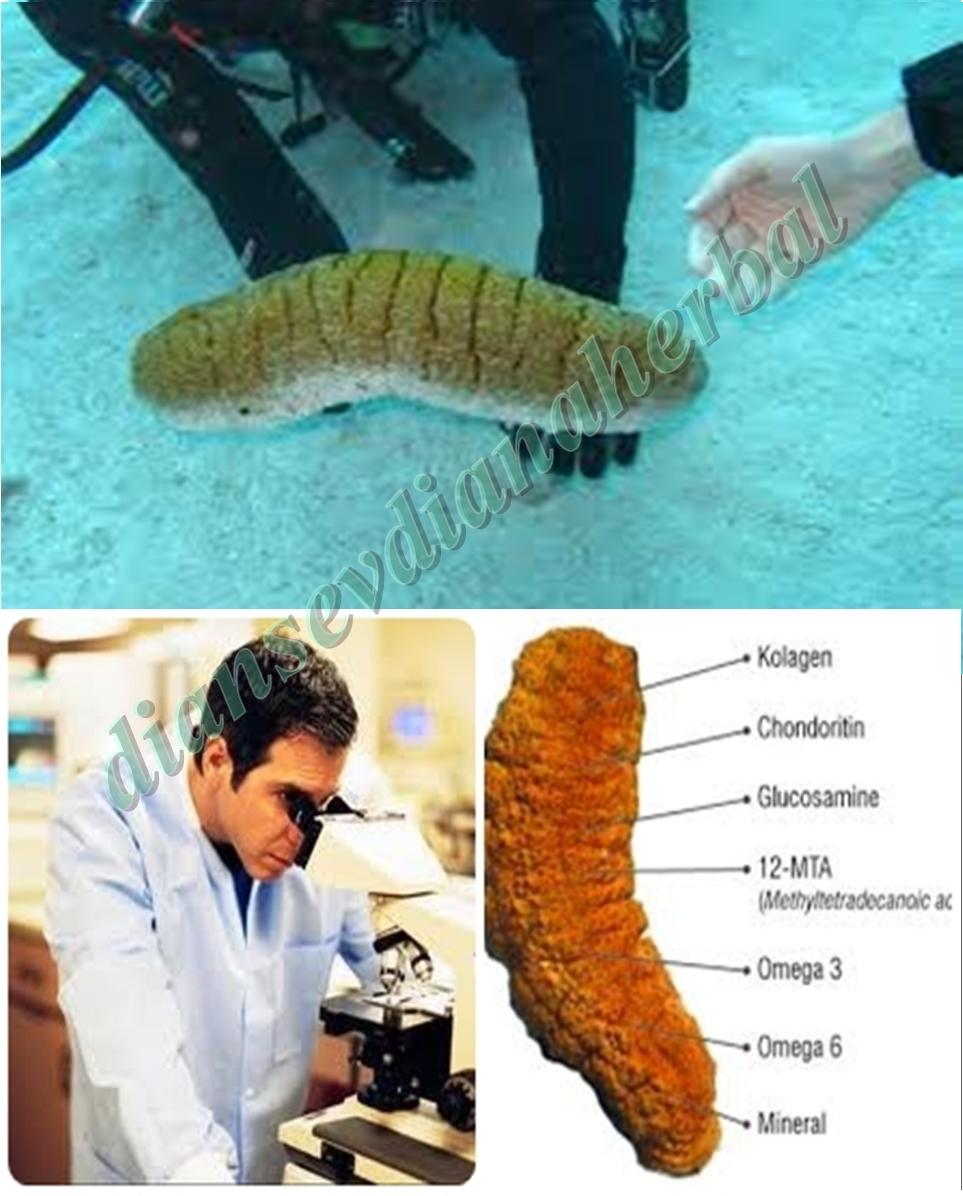 Obat Pancingan Alami Yang Terbukti Ampuh Sembuhkan