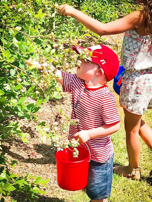 Family field trip to Thunderbird Farm Broken Arrow, OK for blueberry picking